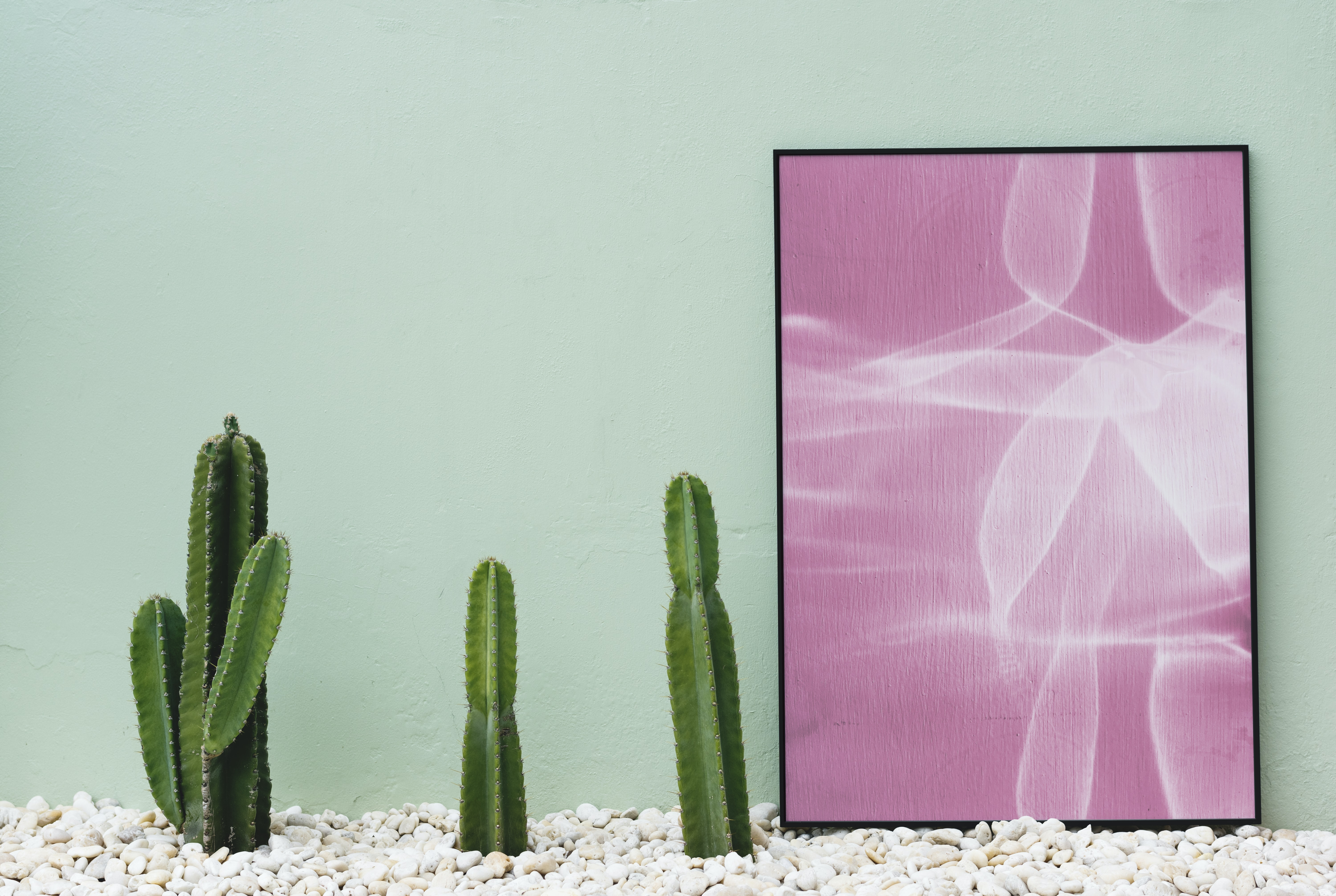 three cacti and pink abstract painting against teal wall