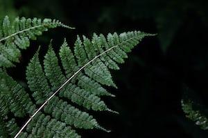 1632. Növények világa
