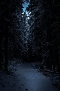 """You open your eyes, they are blurry. You look around to see. Nothing but some trees, """"I must be in a forest"""" you mumble as you try to stand up but find you are tied to a tree. You start to move around trying to untie yourself, but it only attracted som... scary story stories"""