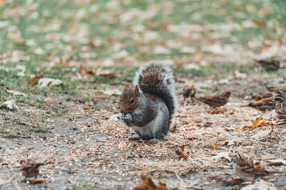 white, gray, and brown squirrel near brown sparrow surrounded by dried leaves