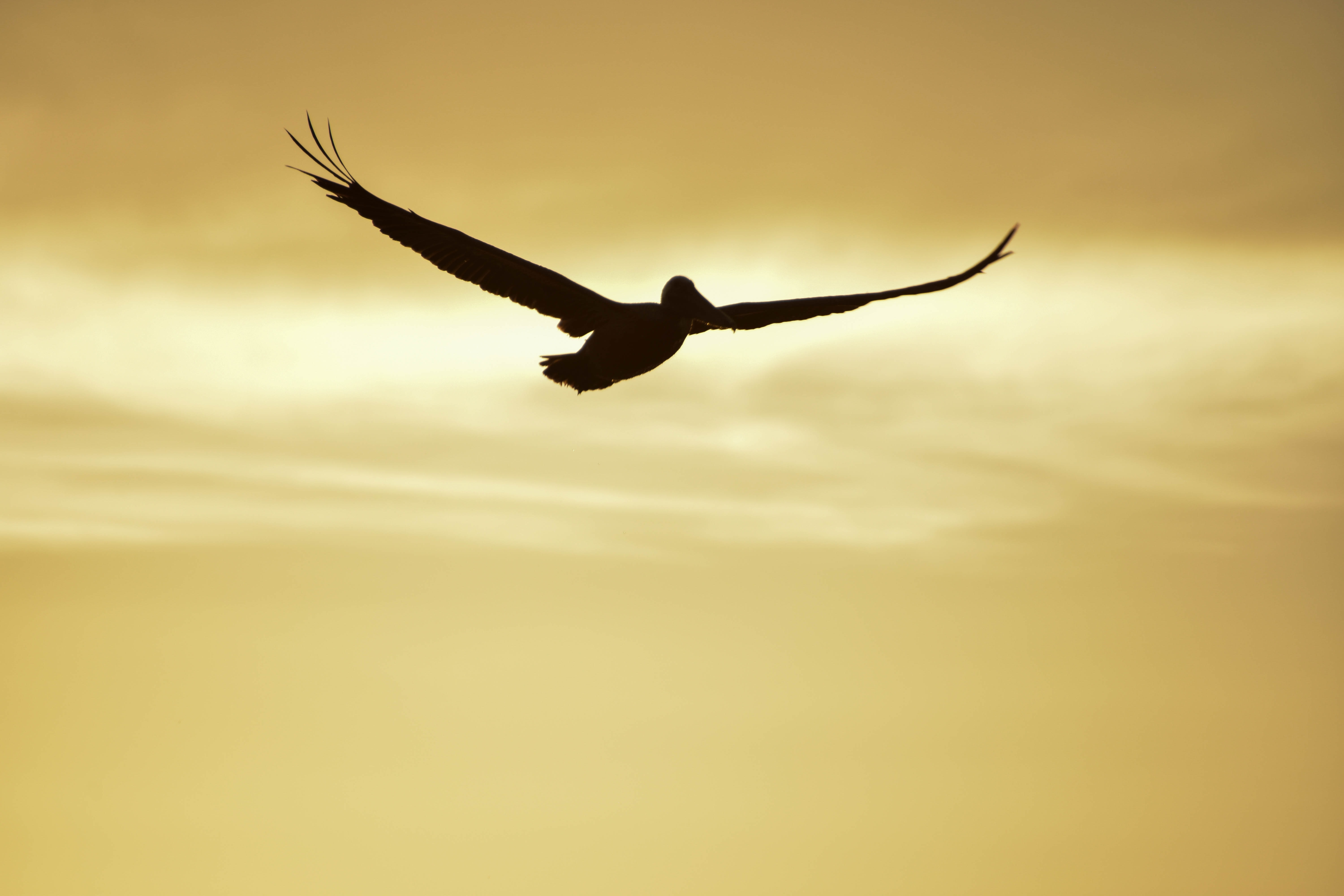 silhouette photography of flying bird