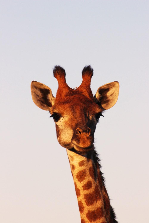 Neck pain giraffing you crazy?