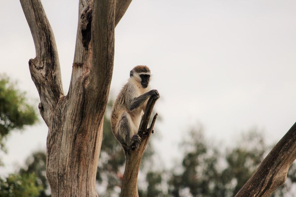 gray langur on tree branch