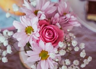 closeup photography of pink rose