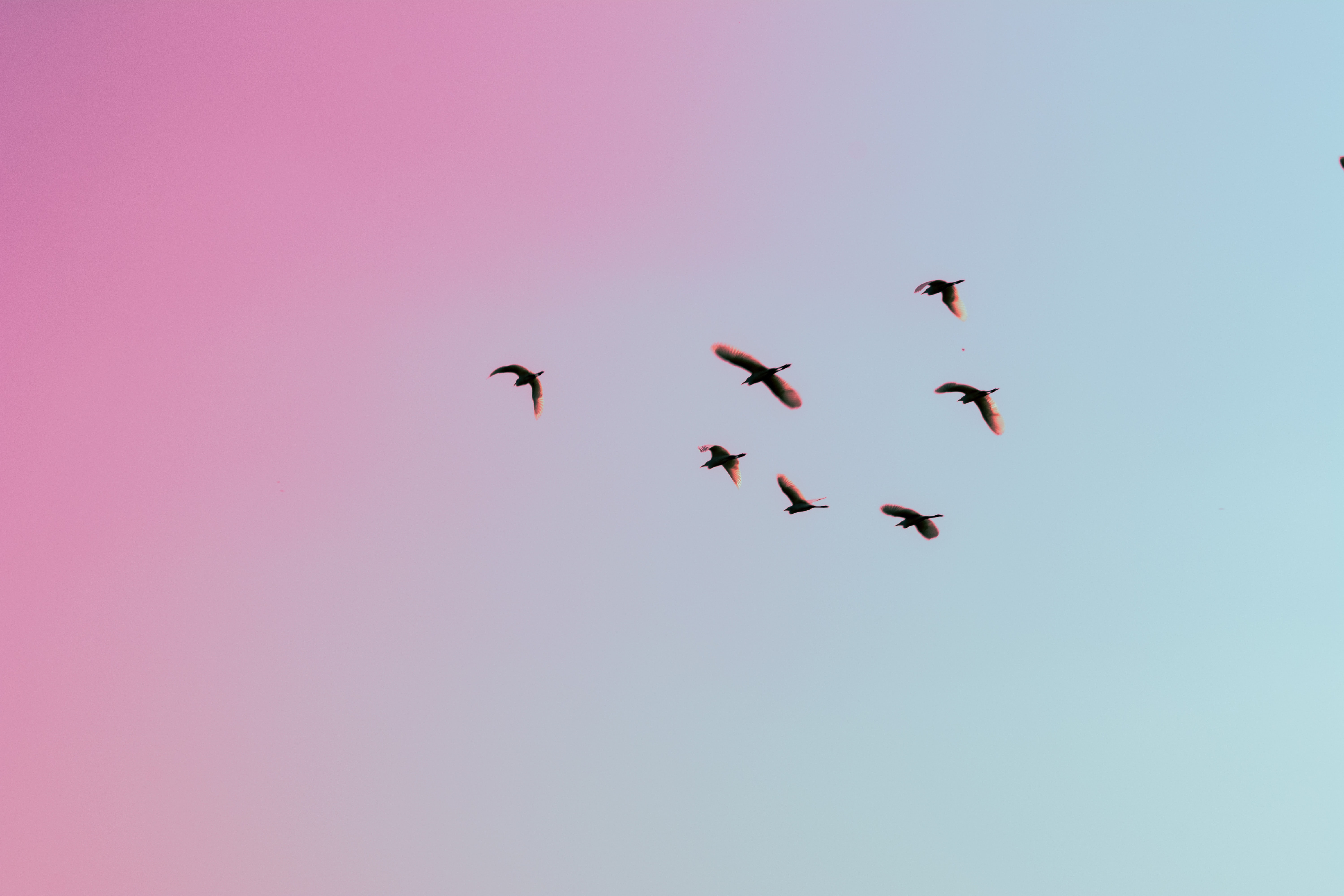 photo of birds flying up in the skiy