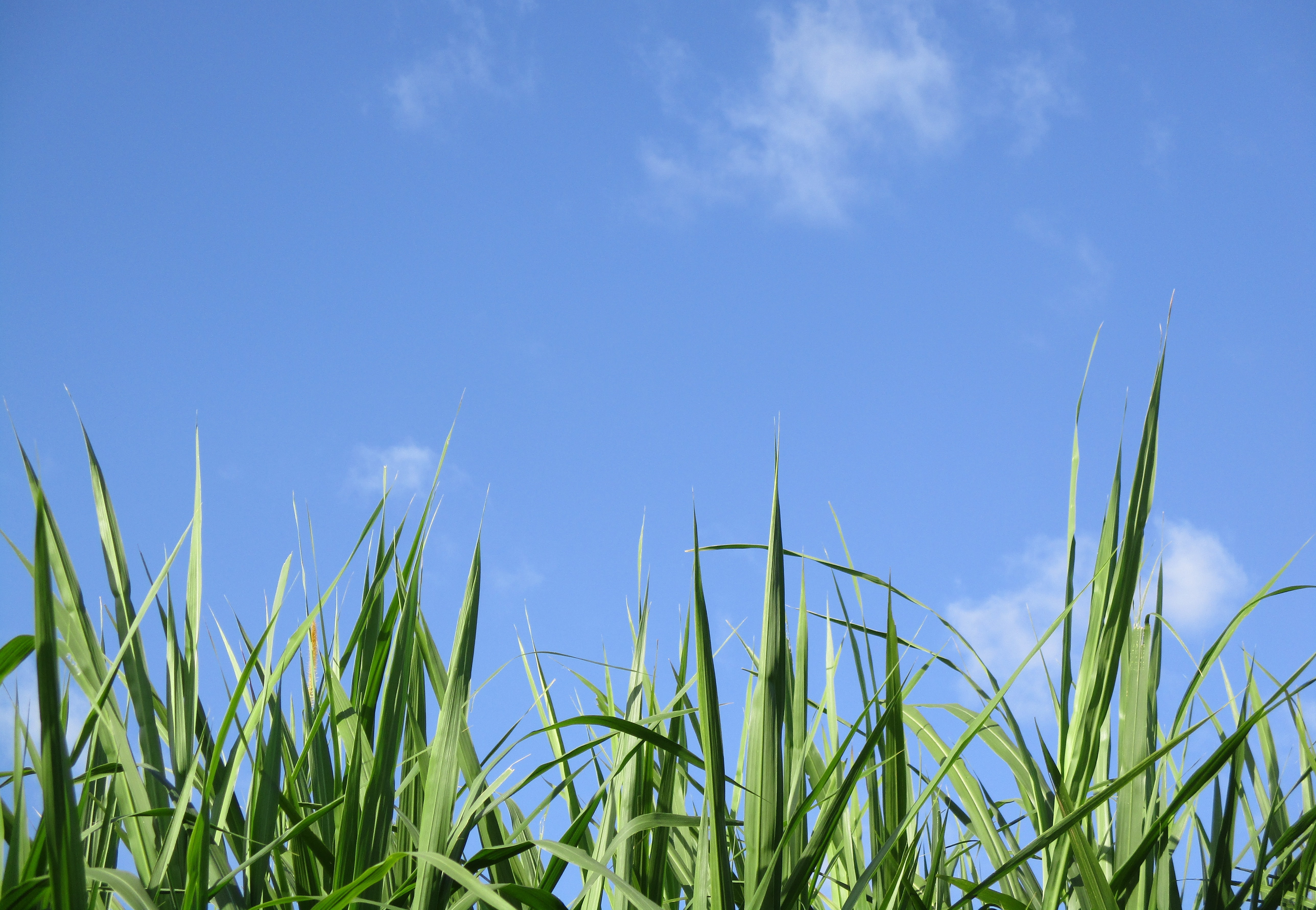 green linear leafed plants under blue sky during daytime