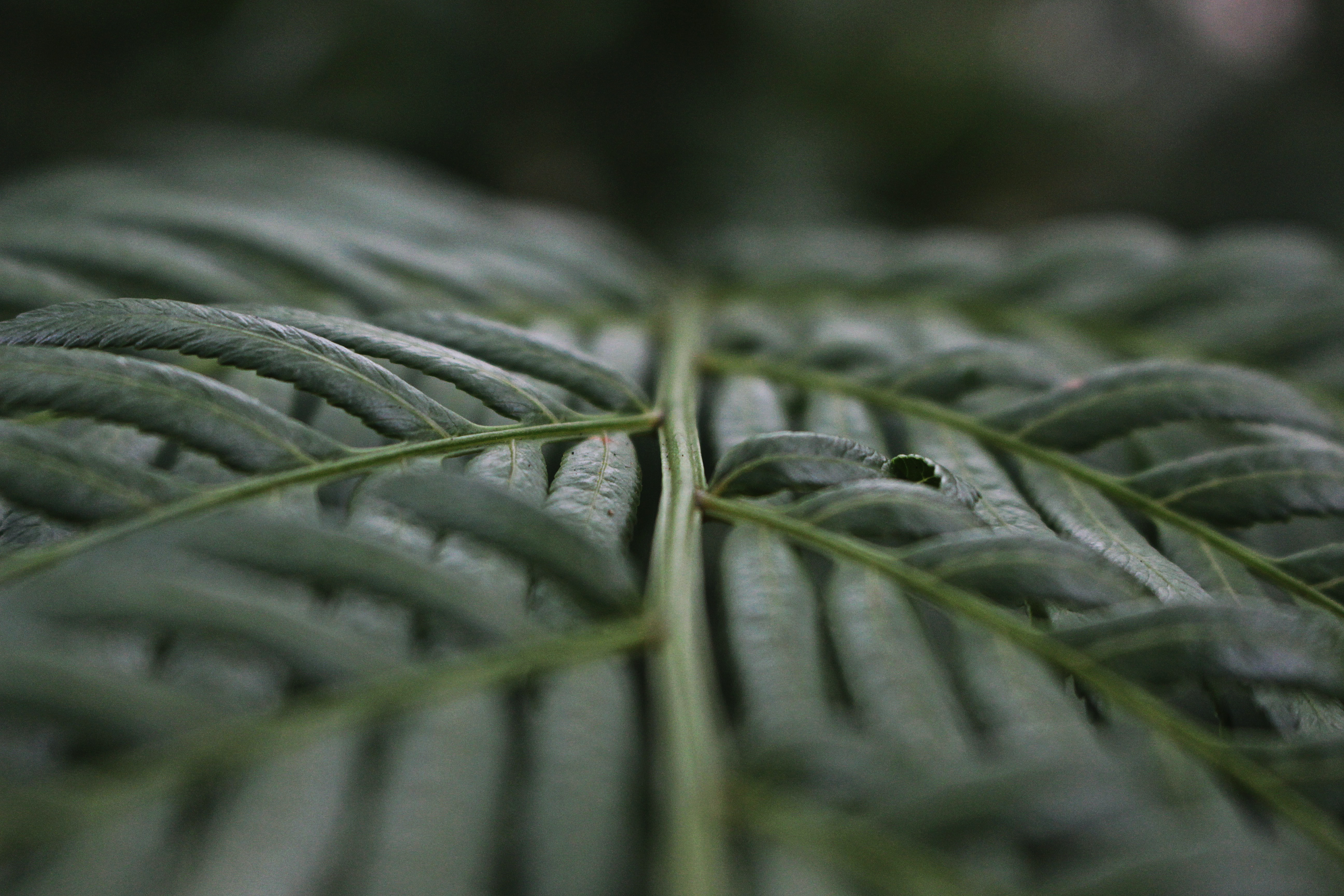 tilt photography of green leafed plants