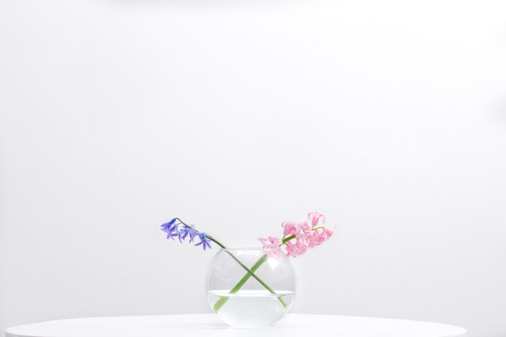 two purple and pink petaled flowers in clear glass bowl