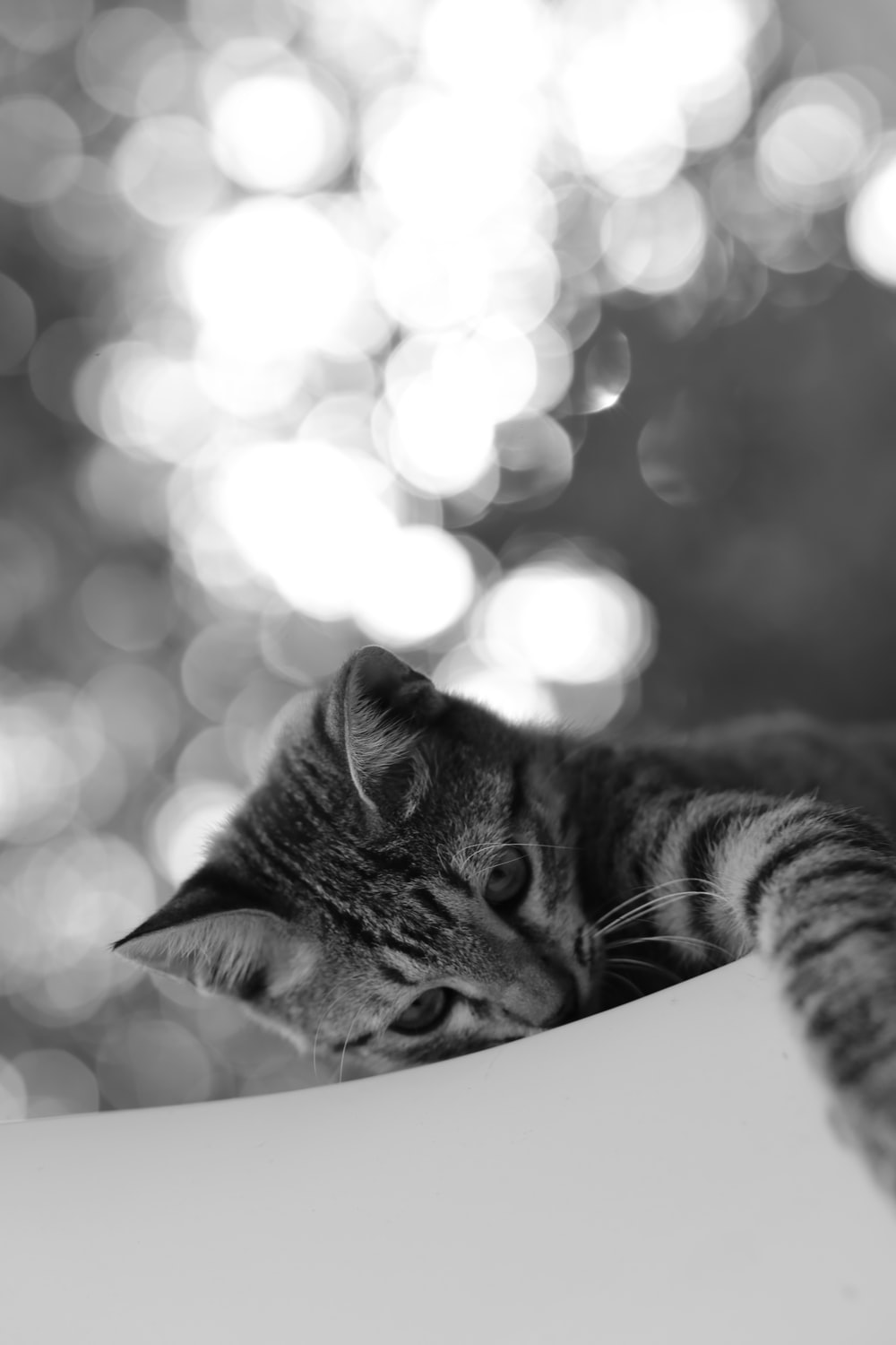 grayscale photography of tabby kitten