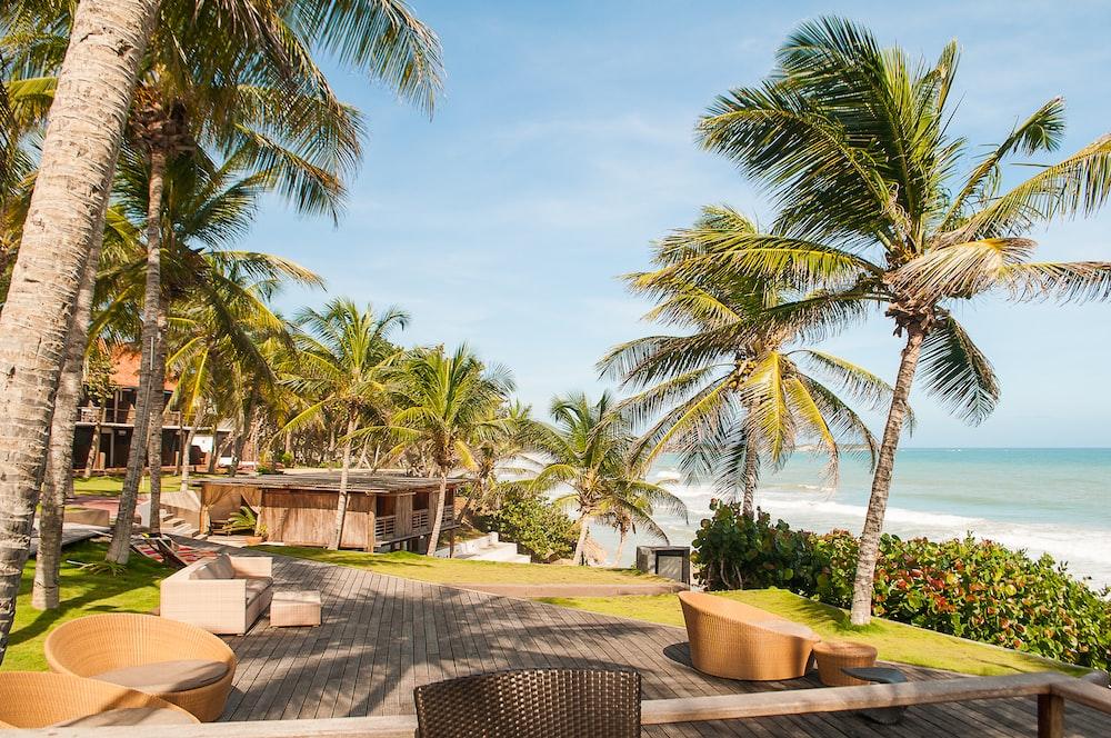 palm trees near ocean under sunny sky