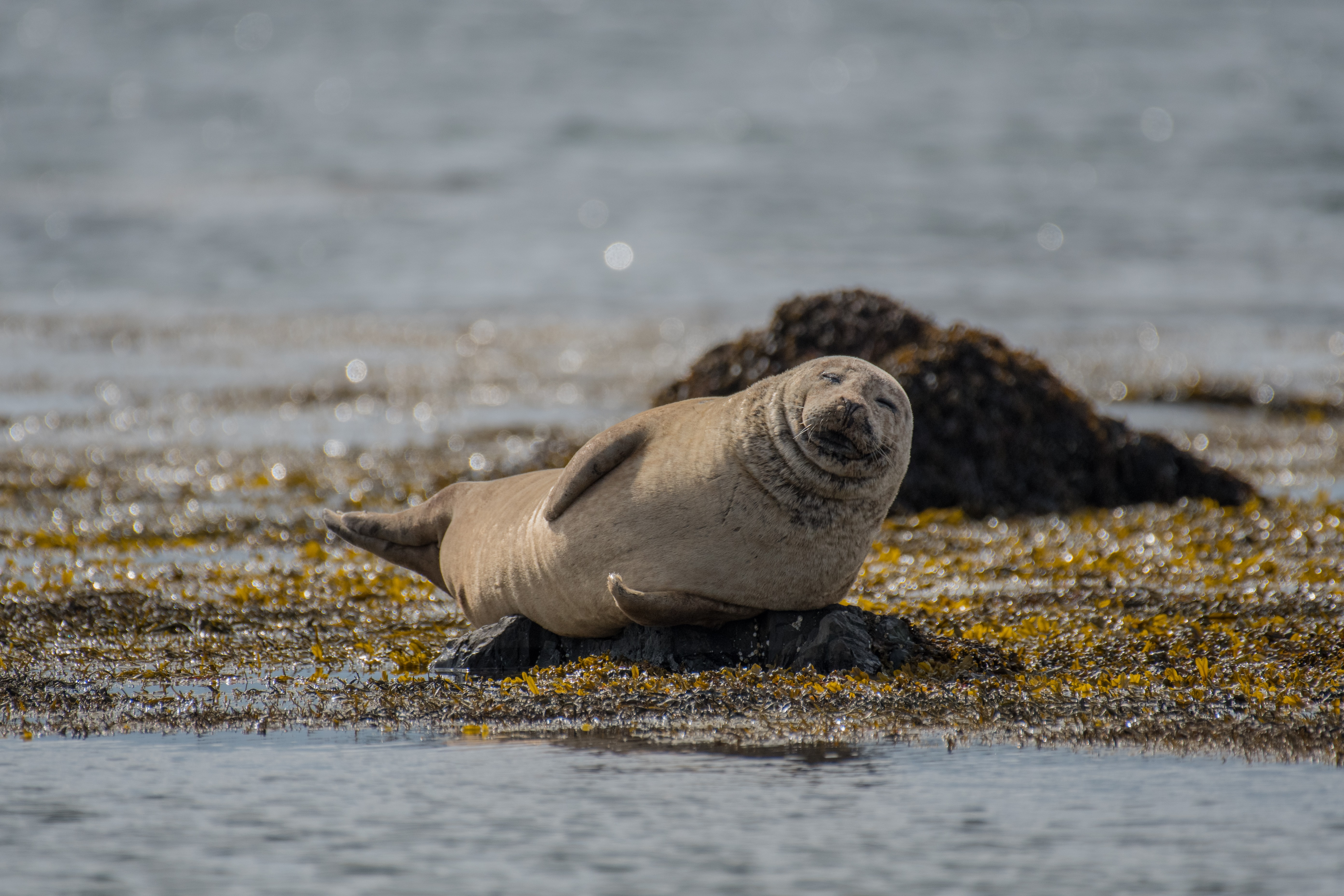 photo of sea lion lying on shoreline during daytime