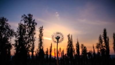 shallow focus photography of dandelion