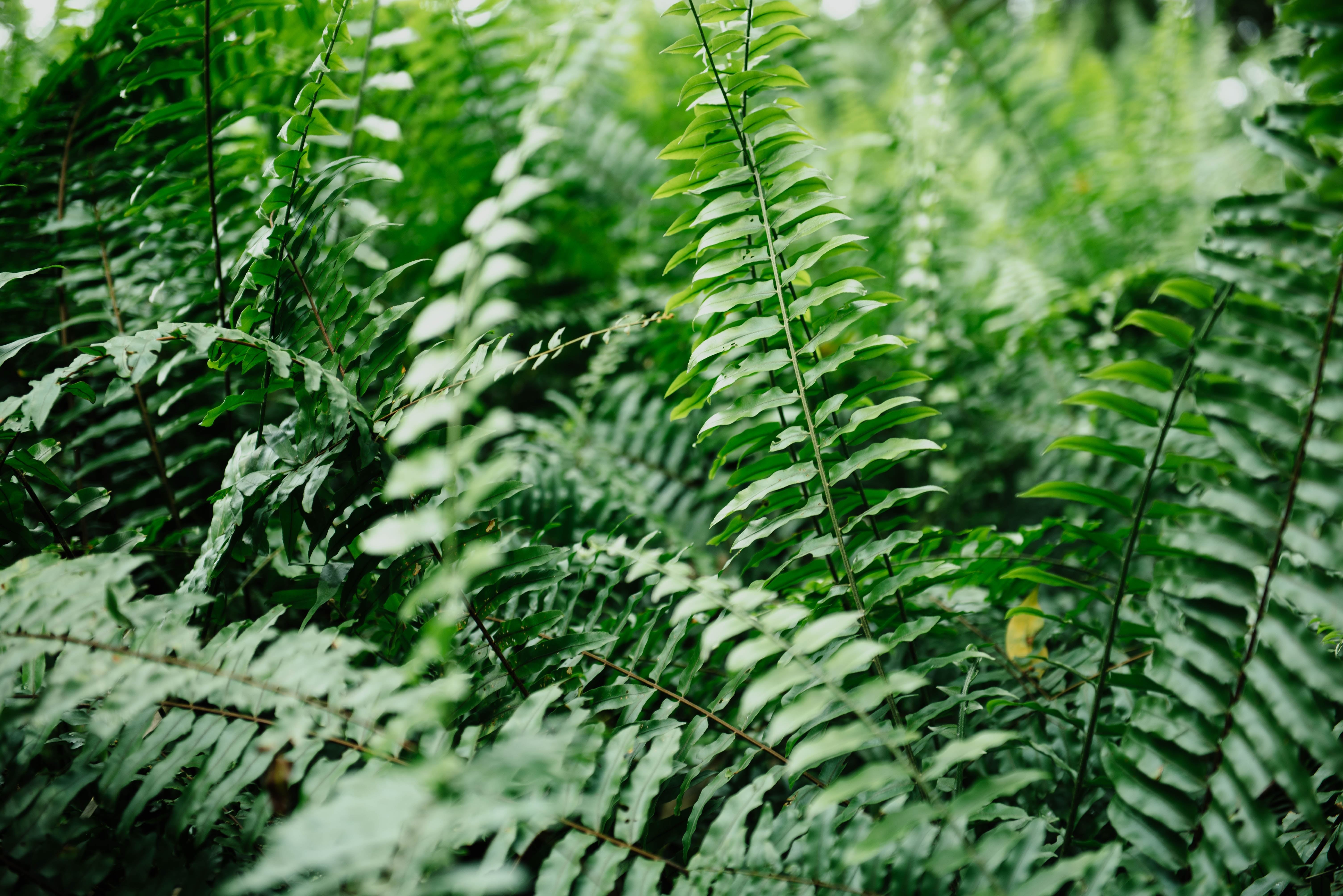green fern plants at daytime