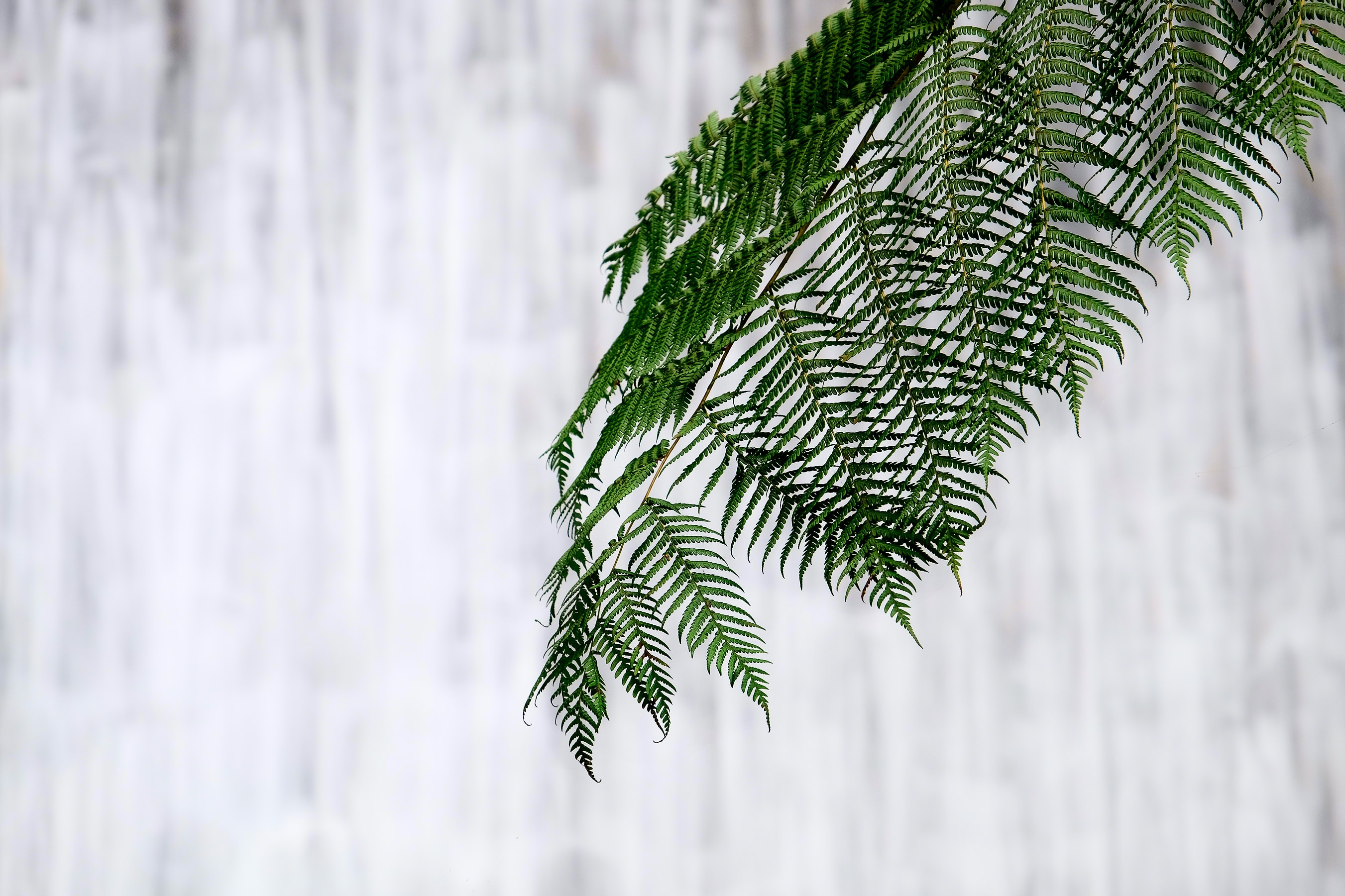 green fern plant closeup photography
