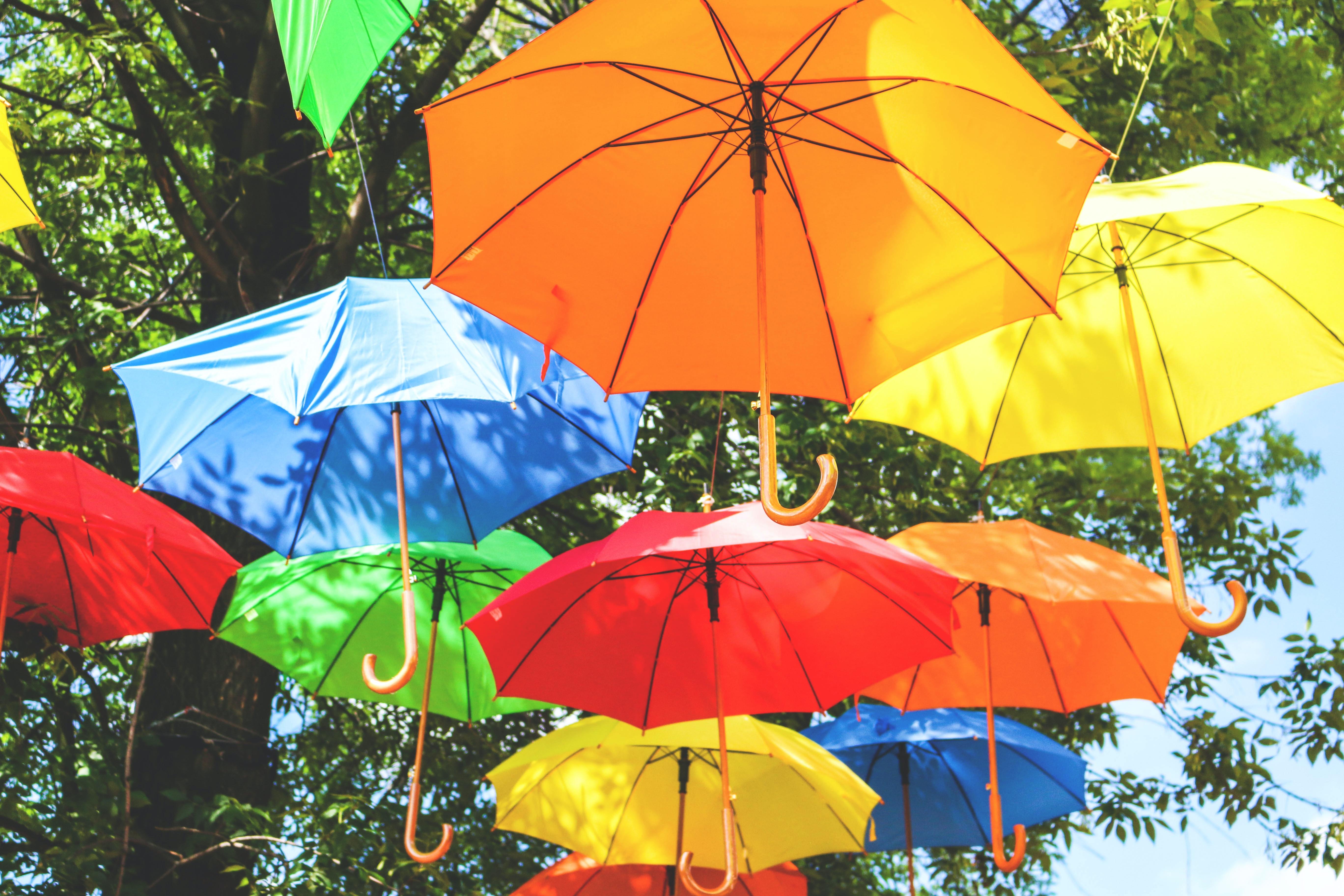 assorted-color hanged umbrellas near tree