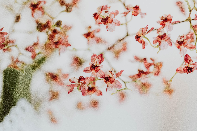 closeup photo of pink petaled flower