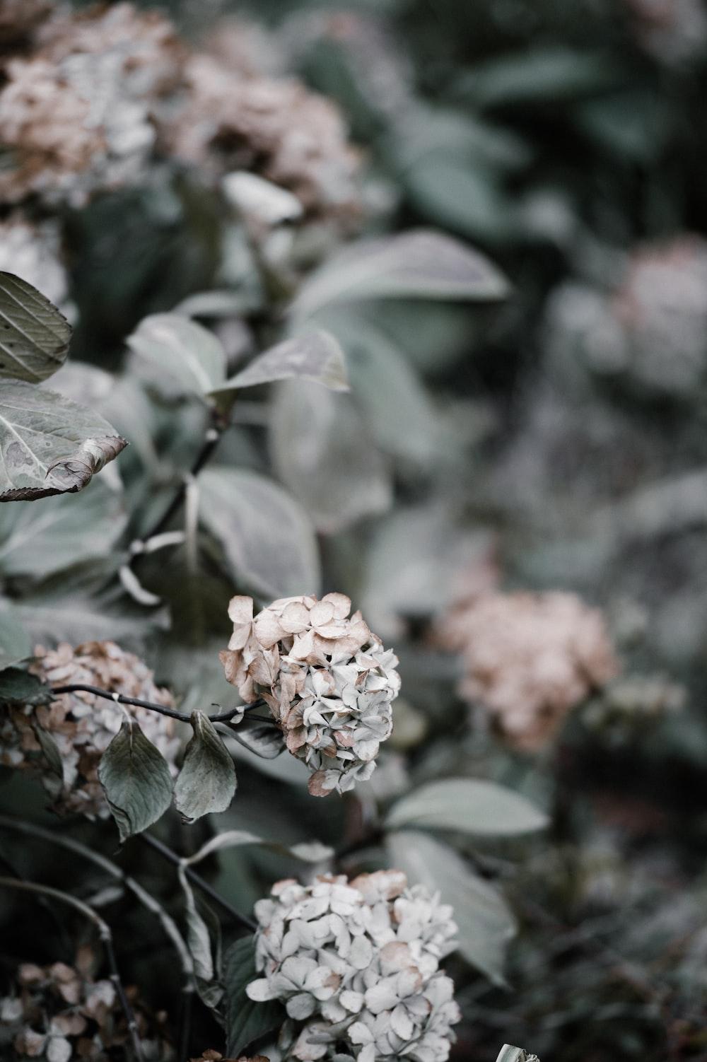 Woodland Flower Pictures Download Free Images On Unsplash