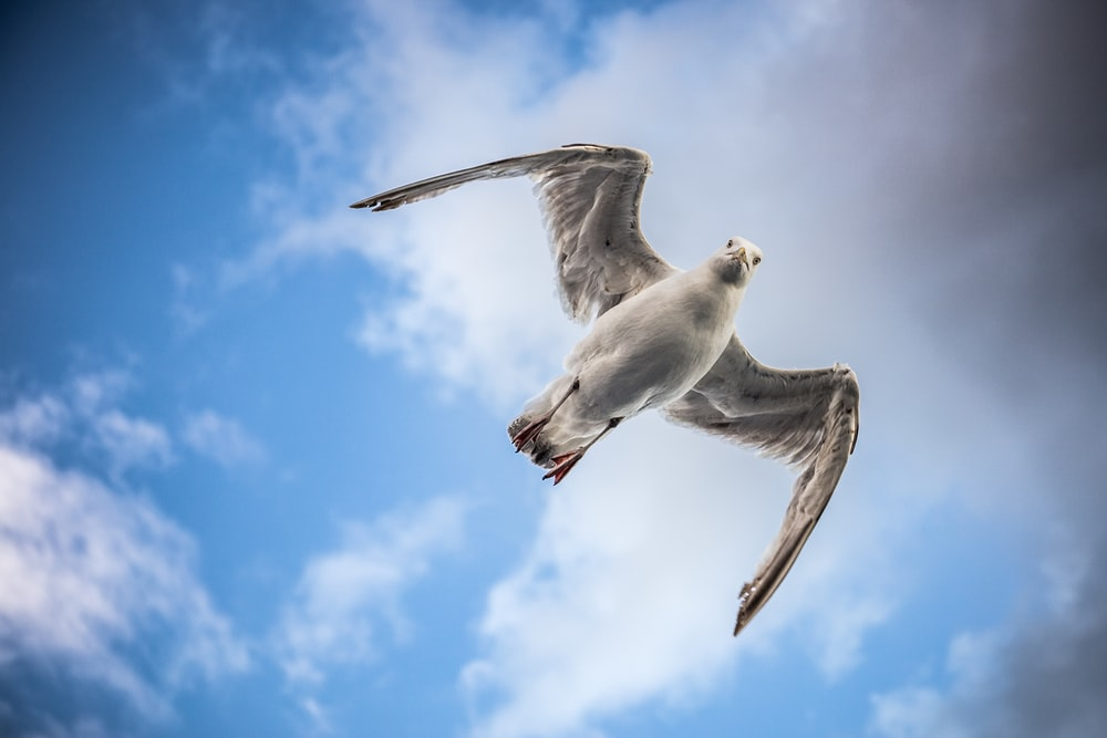 bird flying in the middle of sky