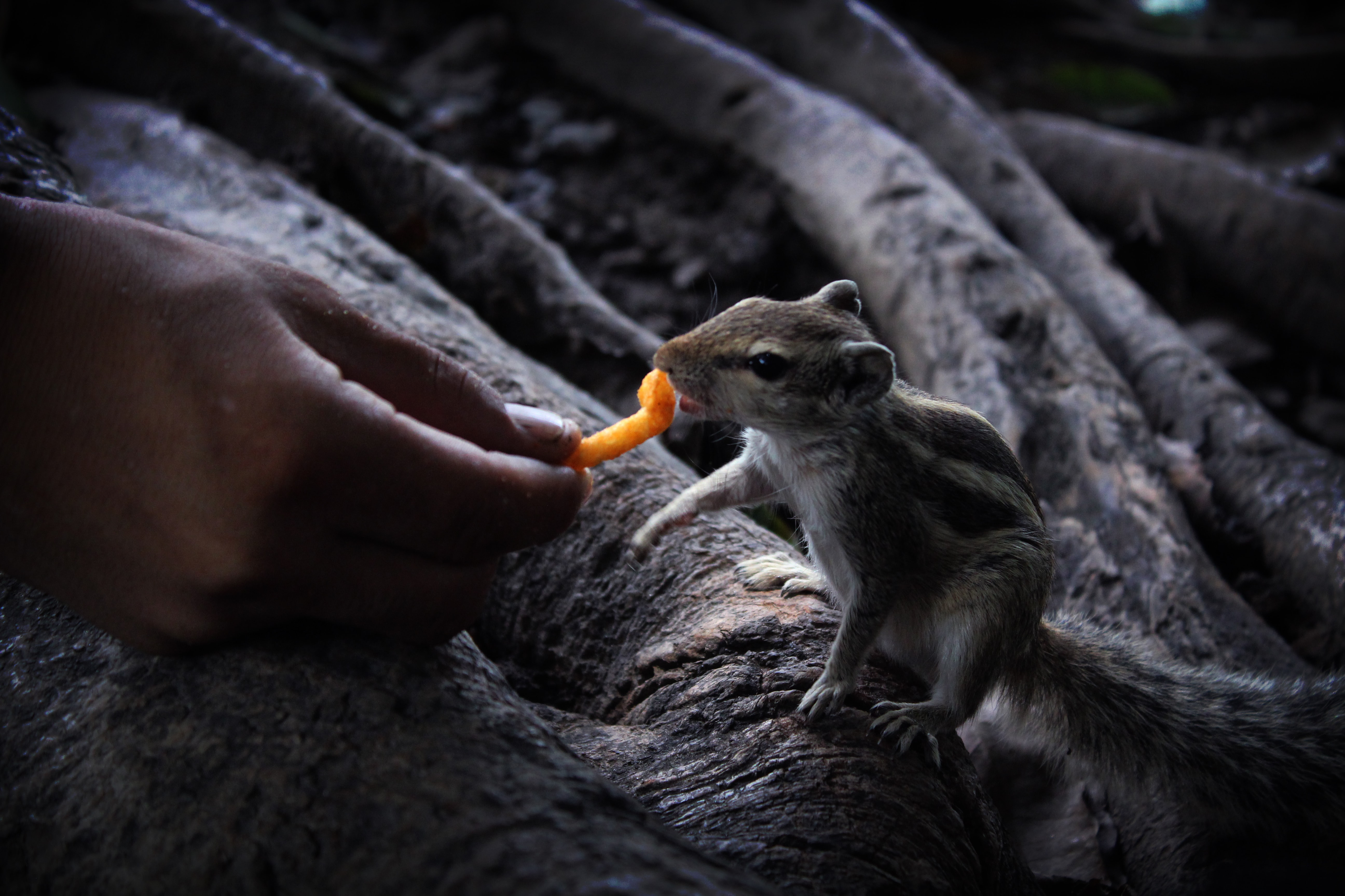 selective color photography of person feeding squirrel