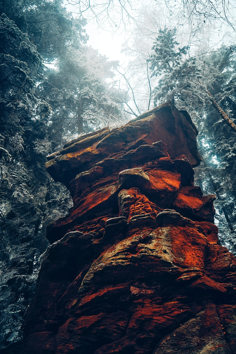 brown rock formation in forest