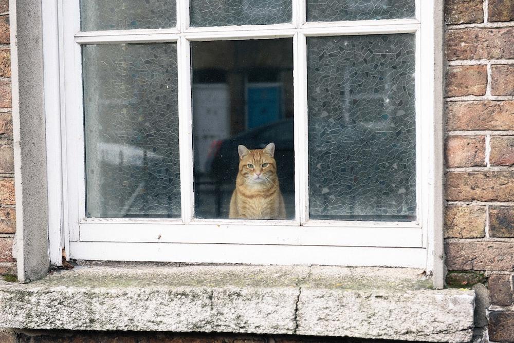 orange cat on open window