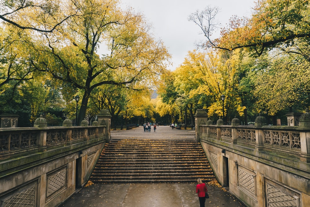 photo of staircase between green leafed trees