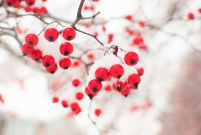shallow focus photography of red fruits chilly zoom background