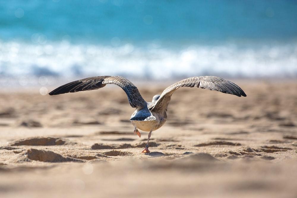 gray and white bird on seashore at daytime