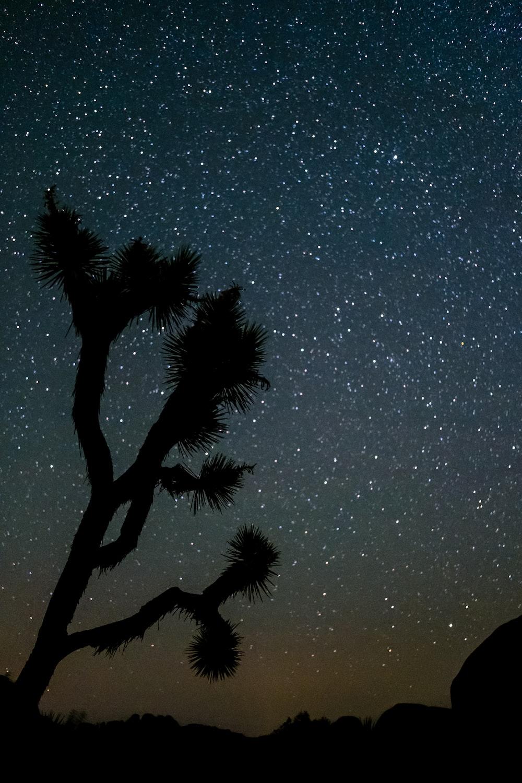 silhouette of tree under night sky