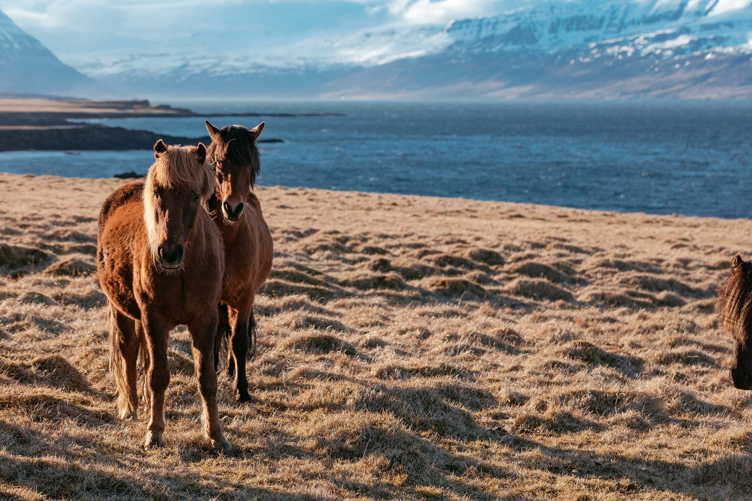 two horses near body of water