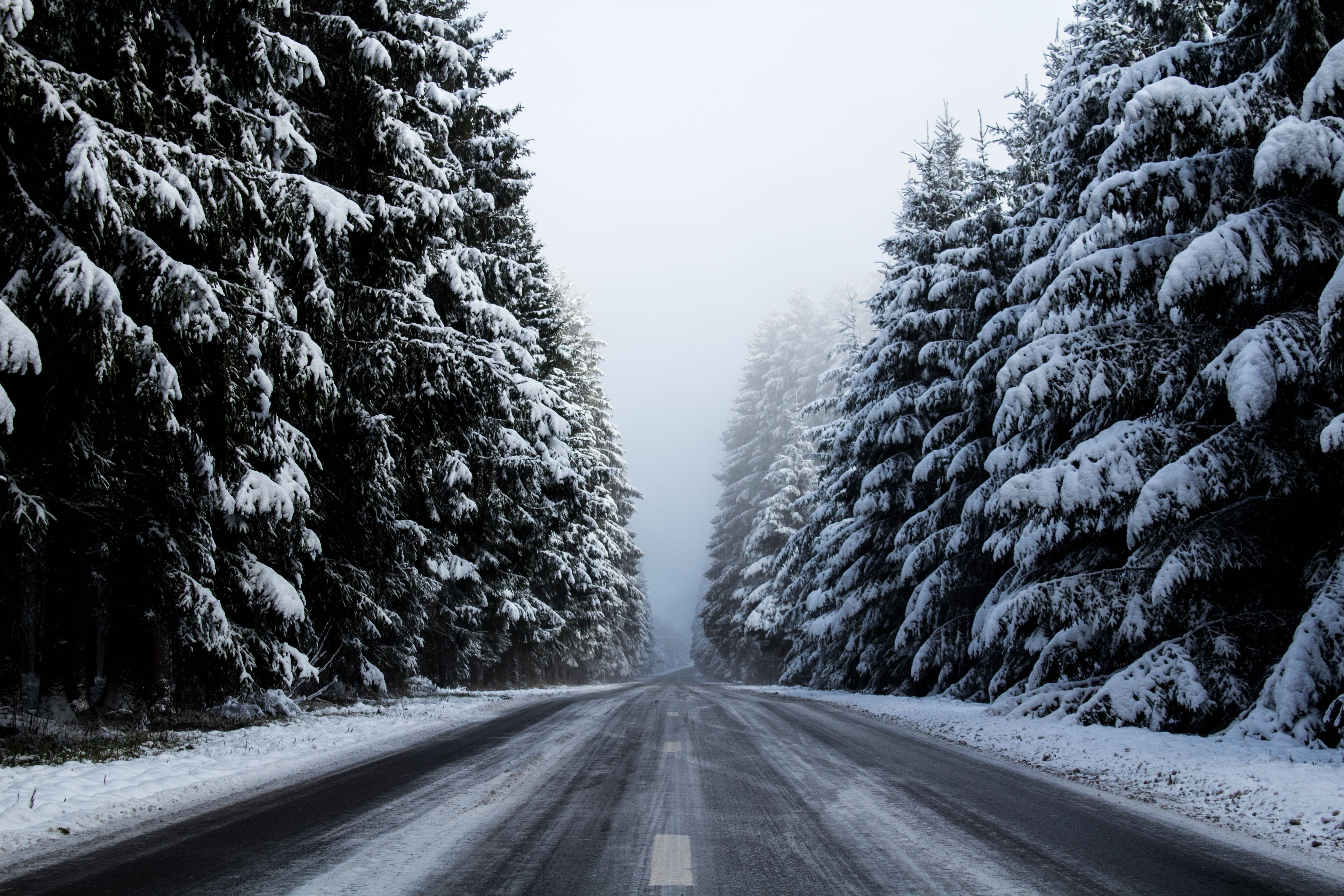grayscale photo of road surrounded by pine trees with snows