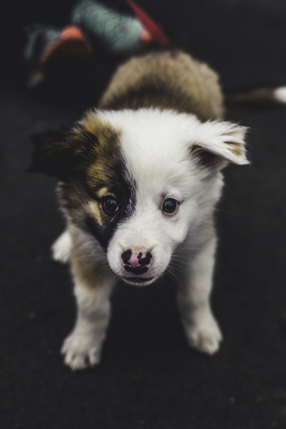 selective focus photography of short-coated white and brown puppy