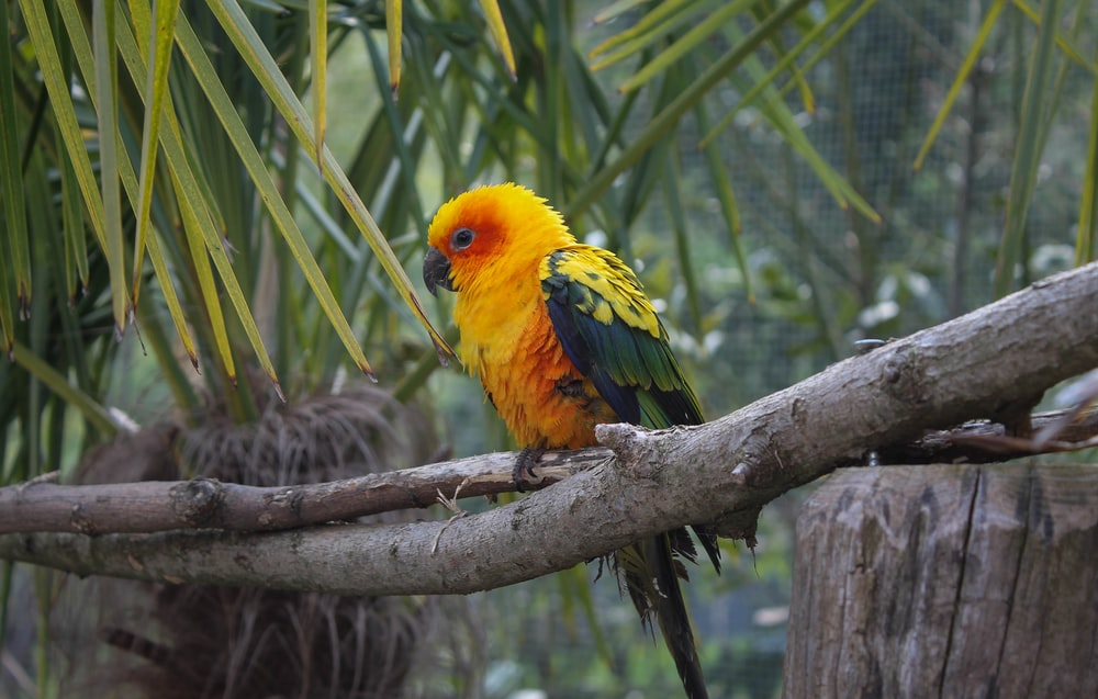 orange and green feathered bird on branch