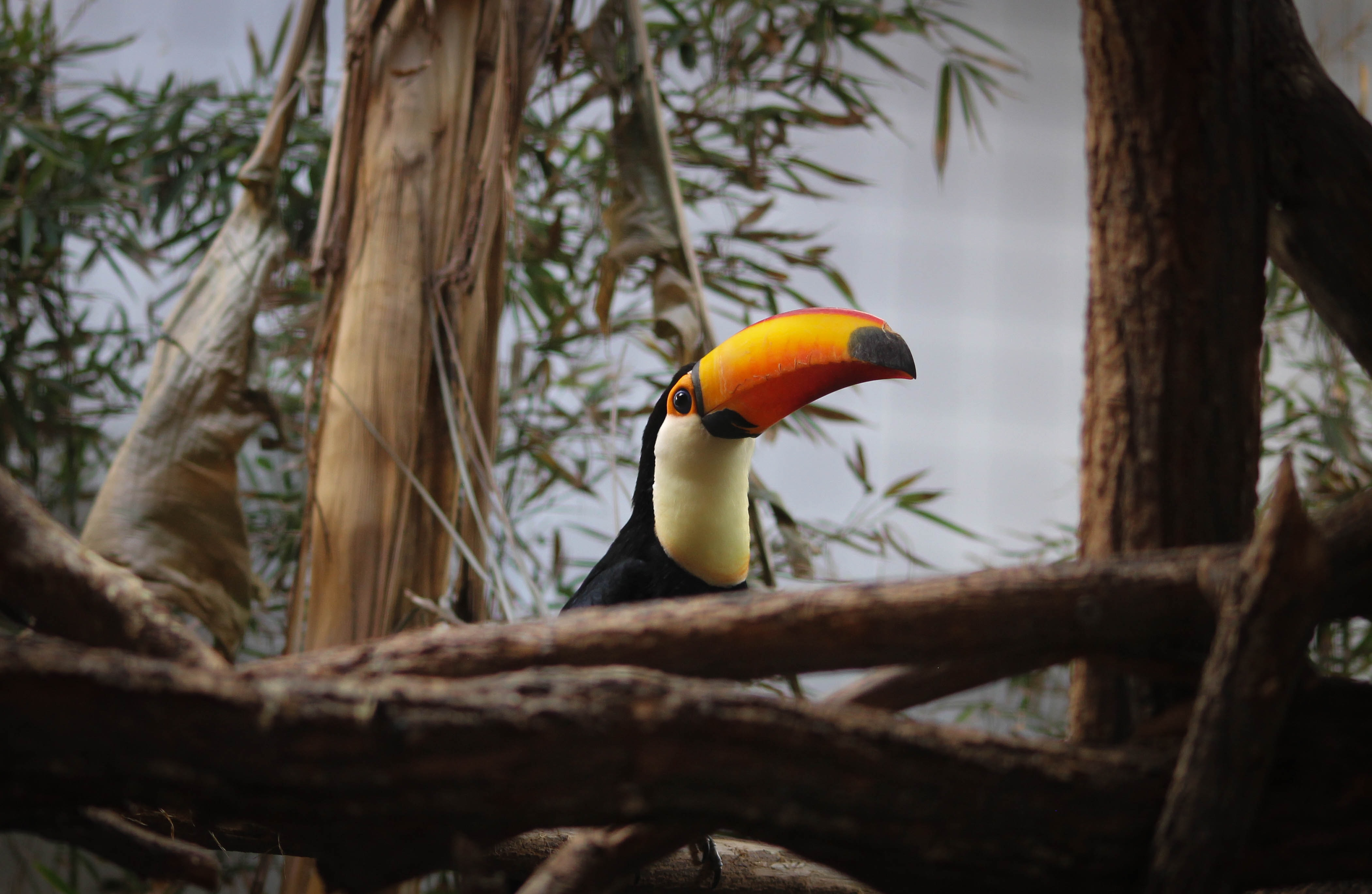 lowlight photography of toucan perching on tree branch