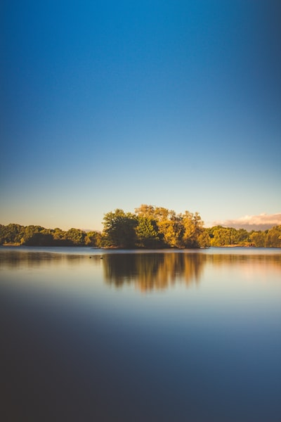 photo of calm body of water surrounded by trees