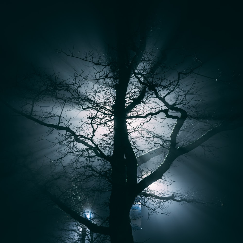 photography of bare trees with lights