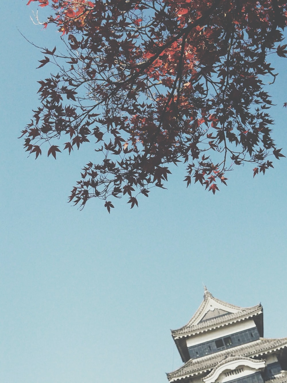 low angle photography of brown maple leaves near temple