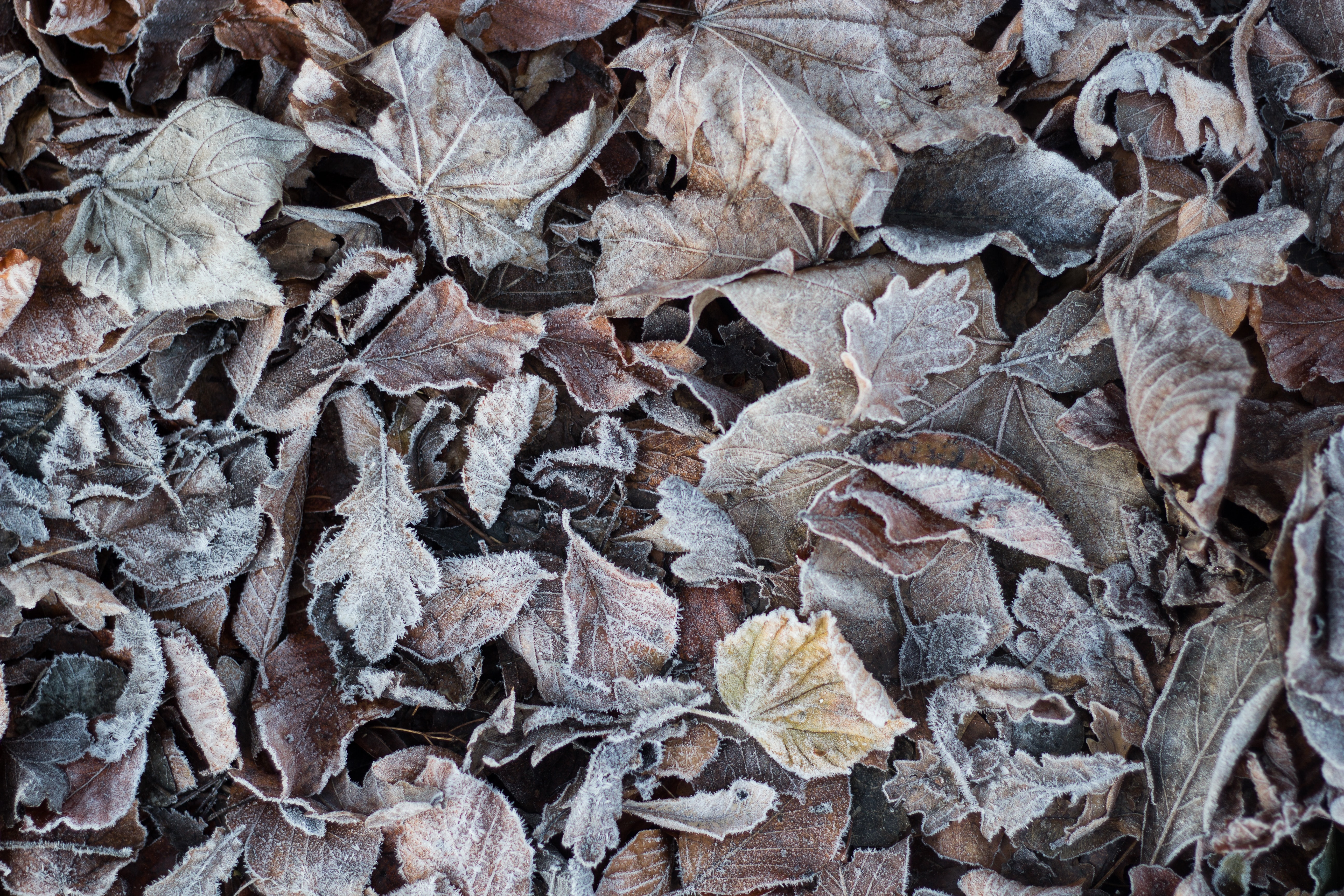 fill the frame photography of dried leaves