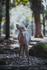 gray deer in the woods at daytime