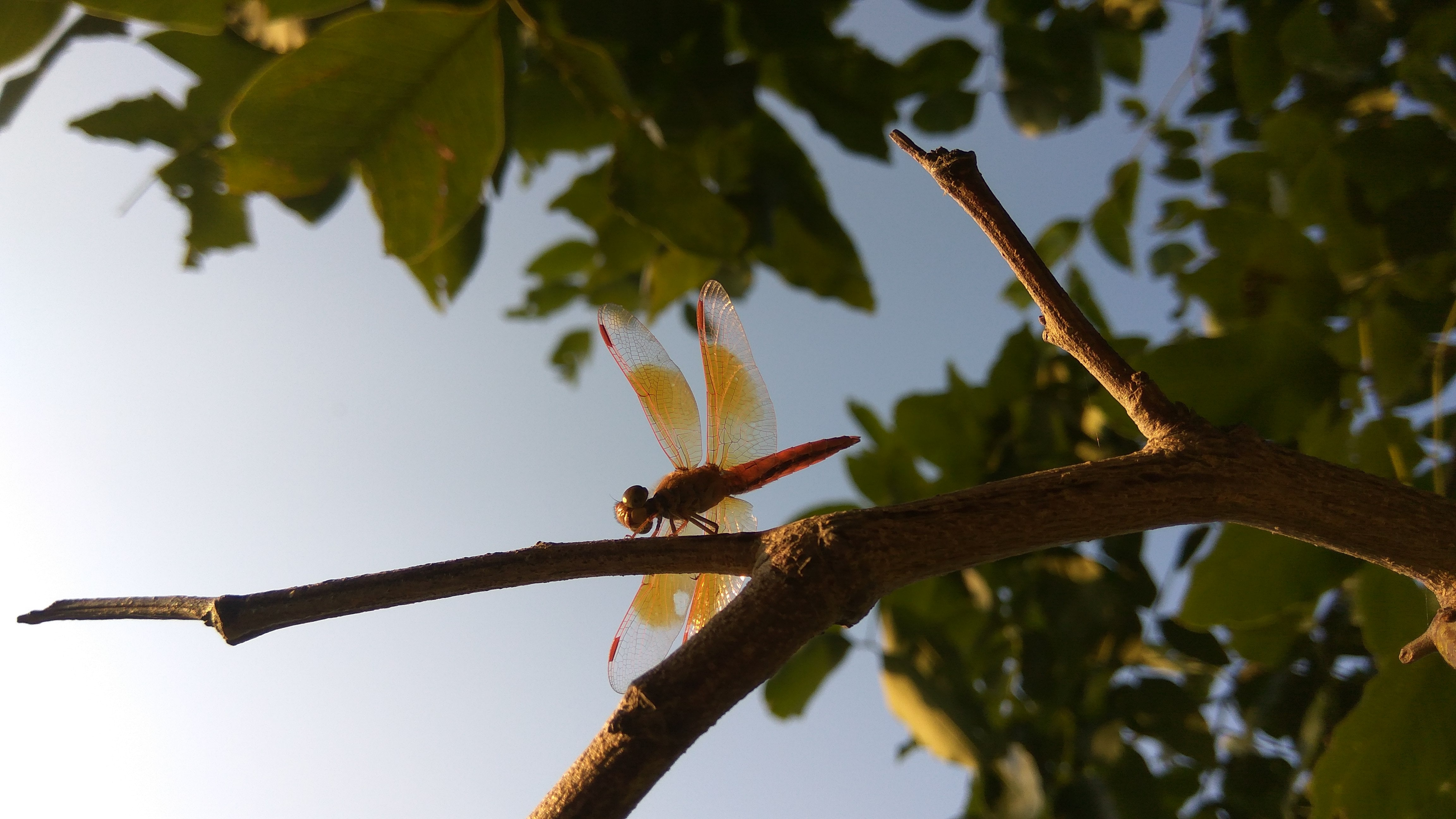 shallow focus photography of red dragonfly