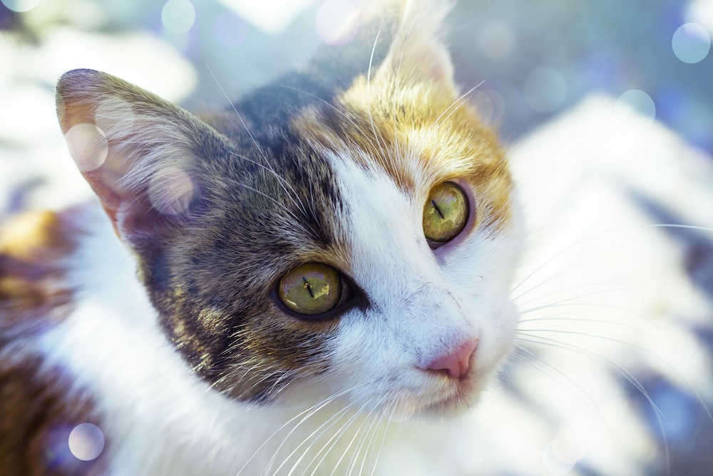 white and gray patched tabby cat selective focus photography
