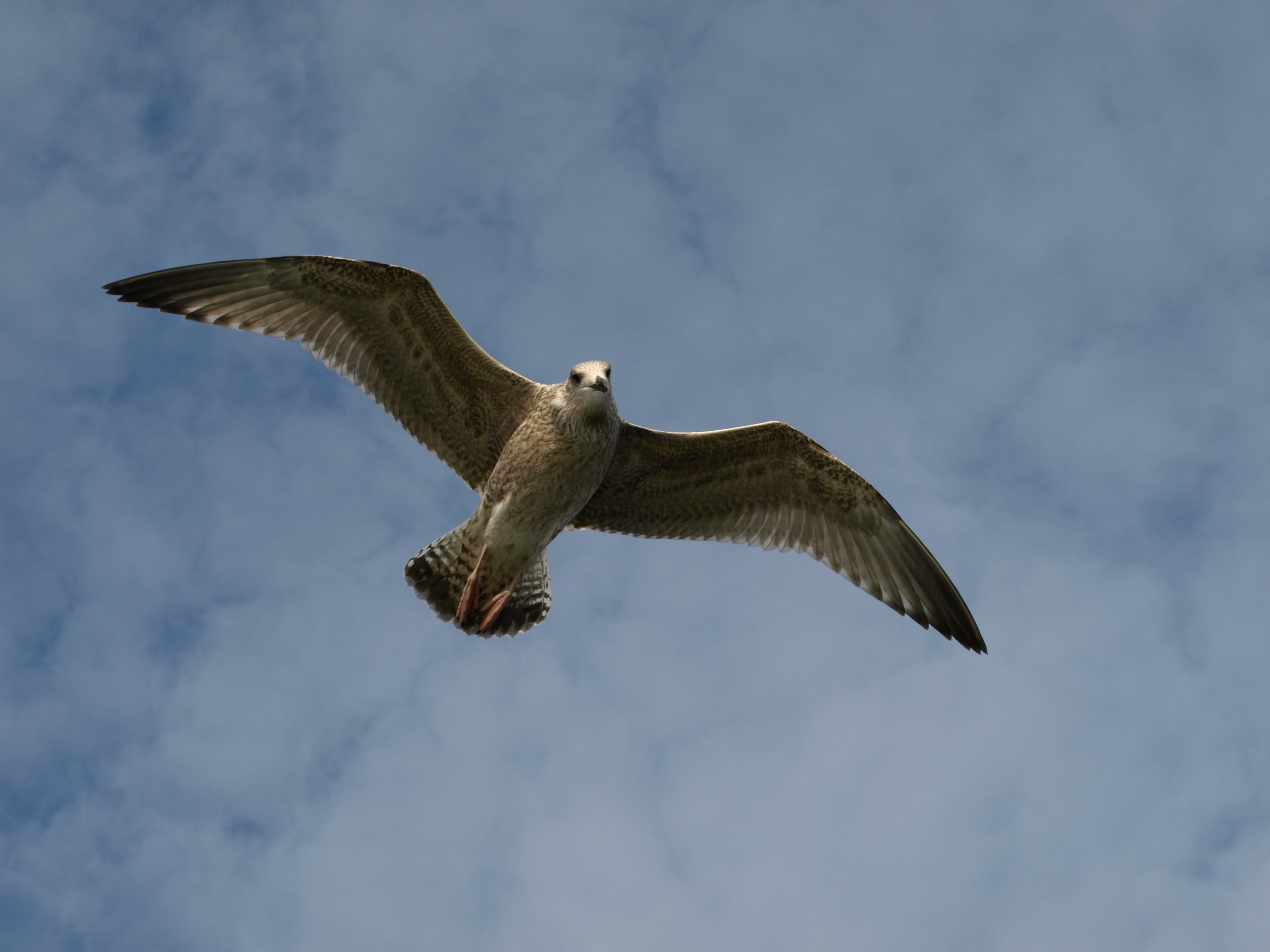low angle photo of brown falcon