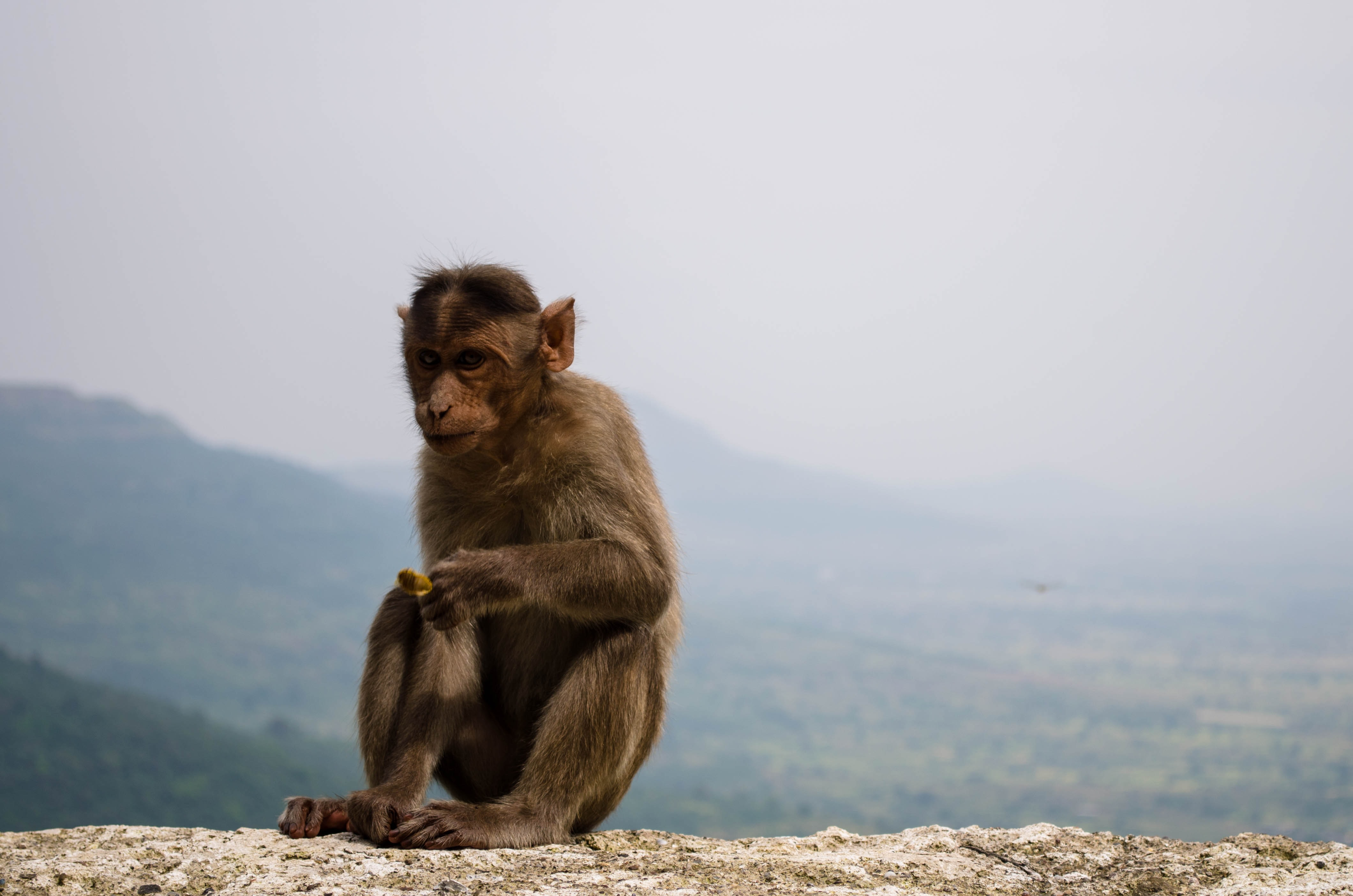 brown monkey sitting on gray stone at daytime