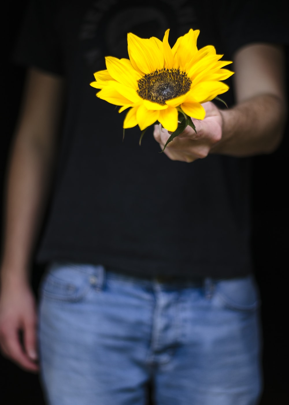 person holding yellow sunflower