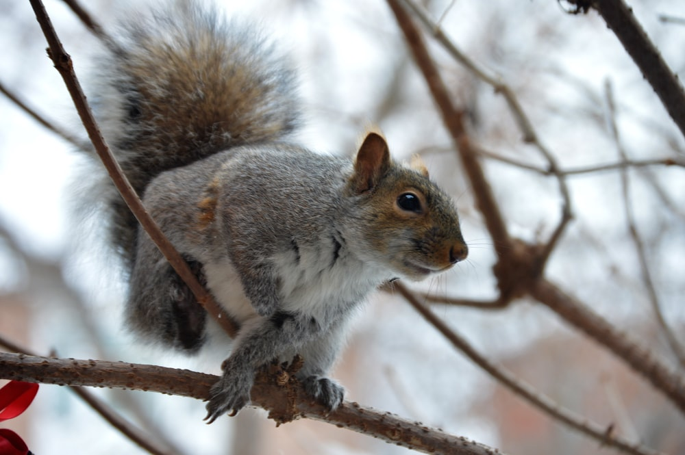 gray and brown animal on tree branch