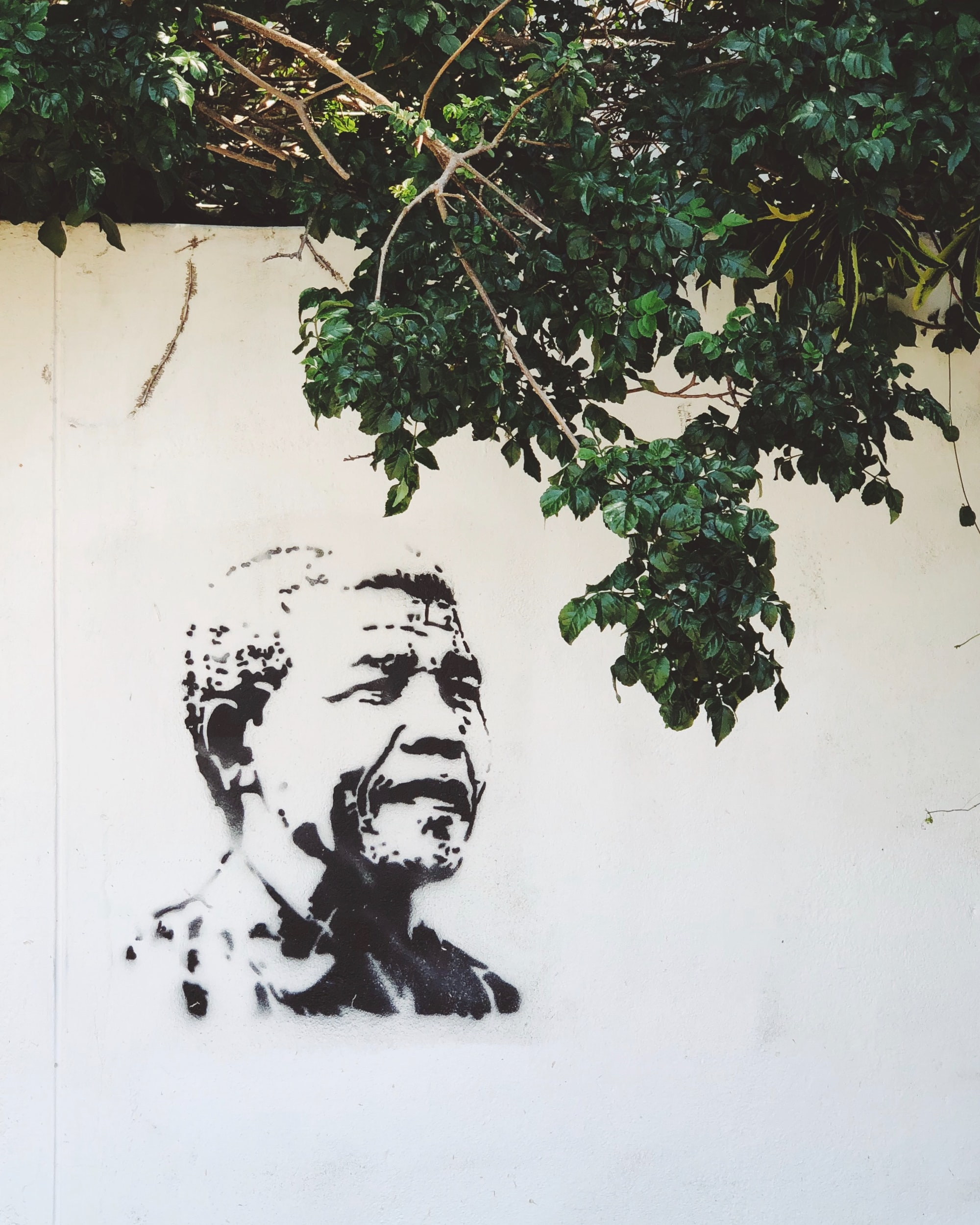 FREE MANDELA and other cardboard signs