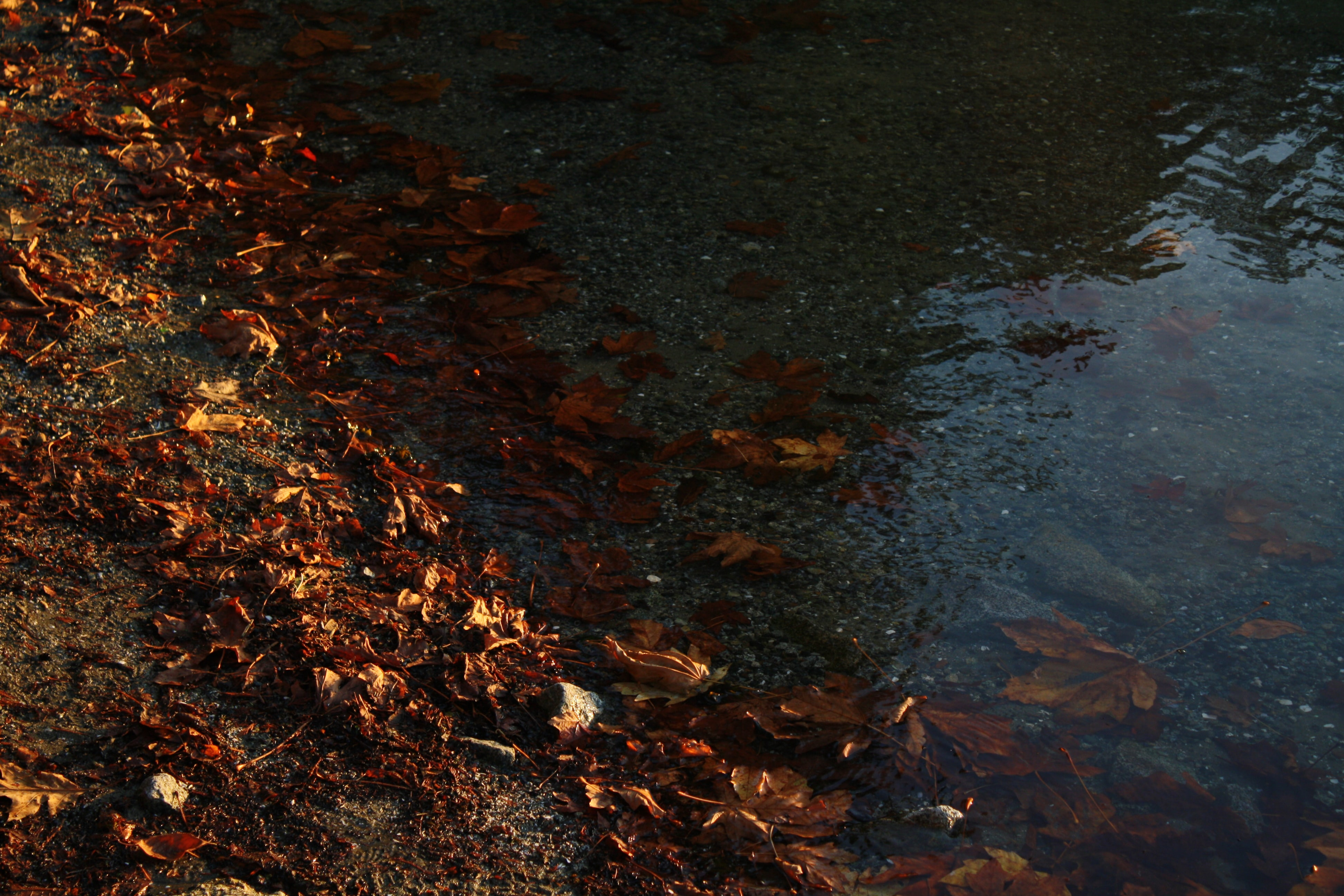 close up photography of withered leaves near body of water