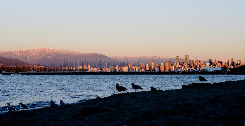 silhouette of seagulls on seashore