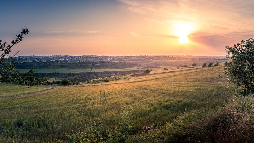 green fields near trees during golden hour