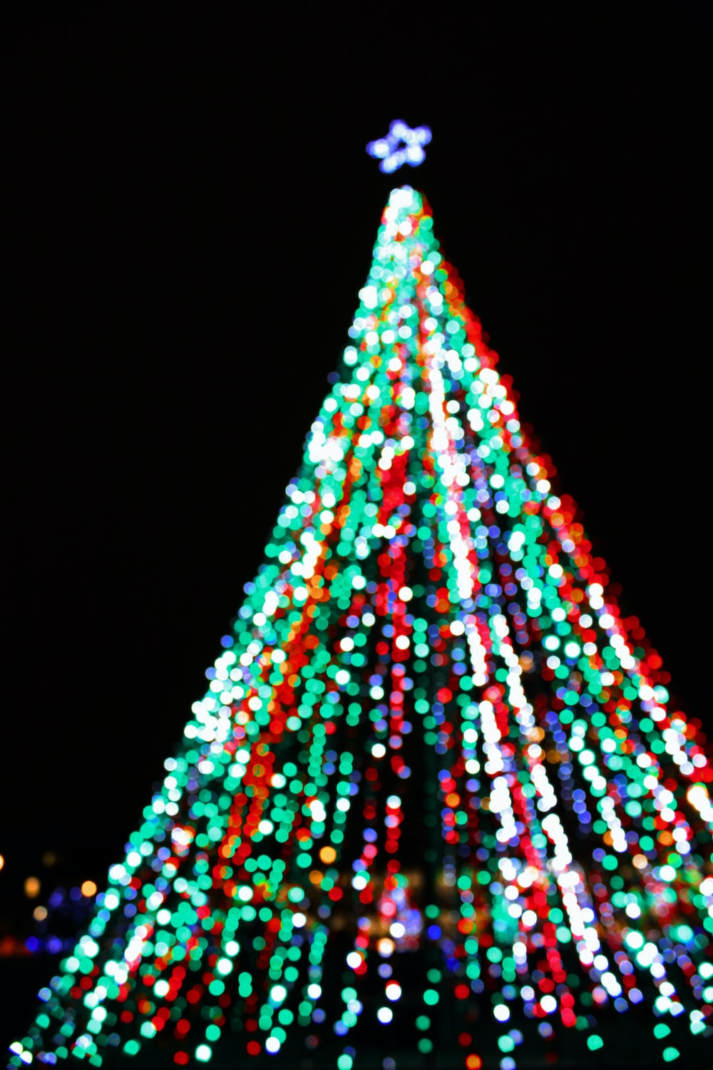 multicolored string light covered tree